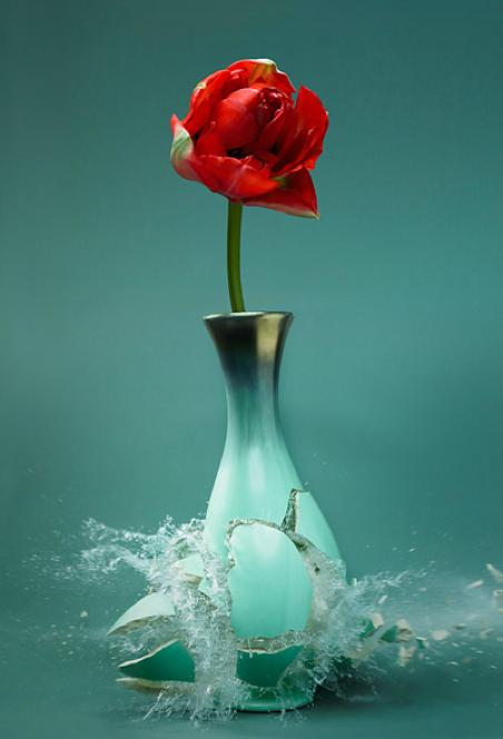 Tulipa   - Martin Klimas