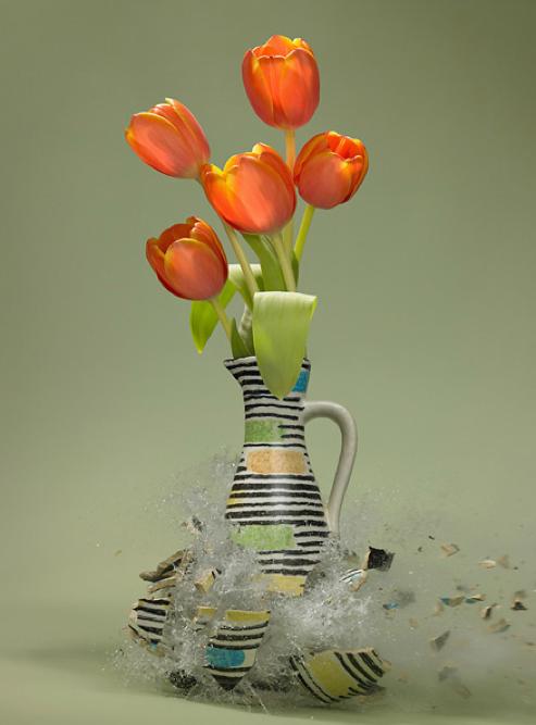 Tulipa  -Martin Klimas