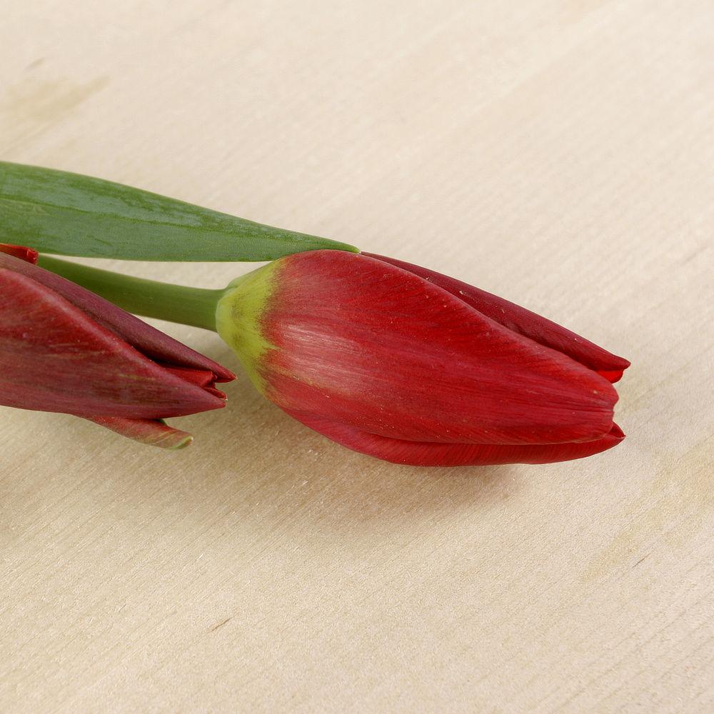 Tulipanes de Vinyols i els Arcs, flor fresca de Km 0